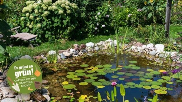 Der Garten von Familie Reiner-Rajakowitsch ist an Biodiversität und ungezügelter Pflanzenvielfalt kaum zu überbieten. (Bild: zVg)