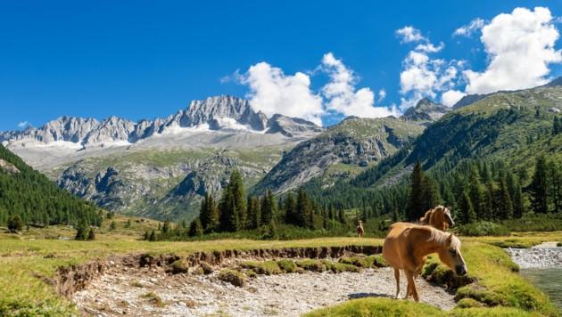 Der Care Alto ist einer der vergletscherten Hauptgipfel der Adamello-Presanella-Gruppe in den italienischen Südalpen. (Bild: ©Alberto Masnovo - stock.adobe.com)