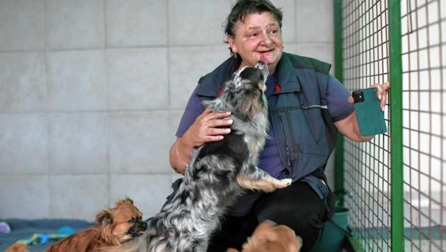 """Eleonore Schandl betreut die Chihuahuas, die von der """"Krone Tierecke"""" aufgenommen wurden. (Bild: Gerhard Bartel)"""