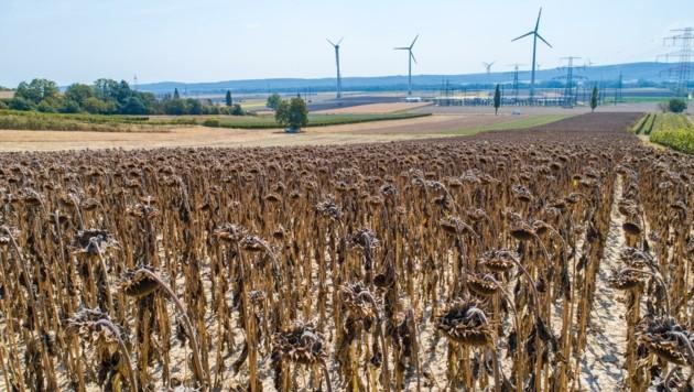 Zu den Folgen des Klimawandels zählen massive Dürreperioden. (Bild: ViennaPress / Andreas TISCHLER)