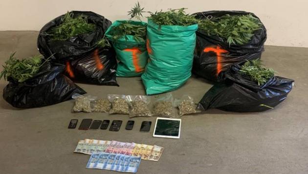 Die vor Ort sichergestellte Cannabispflanzen sowie Bargeld und Mobiltelefone. (Bild: LPD NÖ)