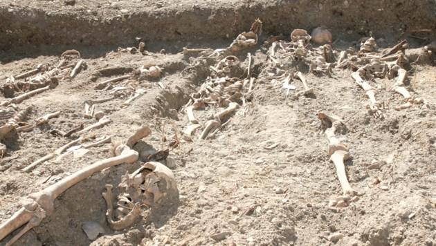 Bisher wurden 45 Skelette gefunden, es dürften aber weit mehr sein. (Bild: Christoph Miehl)