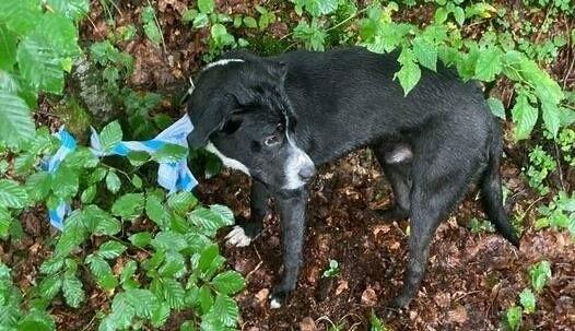 Der Hund wurde mit einem Handtuch an einem Baum angebunden. (Bild: zVg)
