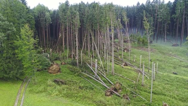 Unwetter hatten heuer im Weilhartforst schwere Schäden angerichtet. (Bild: Fesl Manfred)