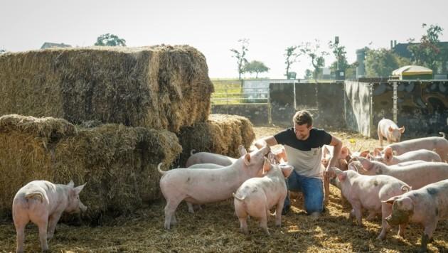 Martin Greul und seine glücklichen Schweine (Bild: Wenzel Markus)