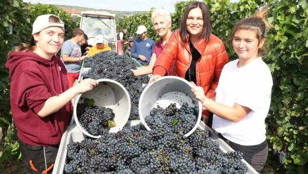 LH-Stv. Astrid Eisenkopf half den Schülern bei der Weinernte. (Bild: Judt Reinhard)