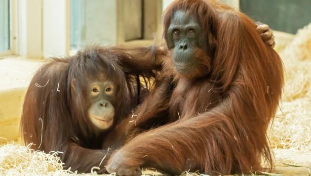 Mit dem Zoo Schönbrunn läuft ein Projekt. (Bild: Daniel Zupanc)