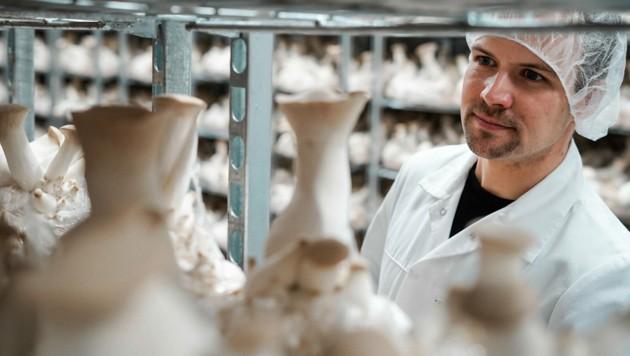 600 Tonnen Pilze wurden im Fleischlos-Betrieb von Thomas Neuburger schon verarbeitet. (Bild: Markus Wenzel)