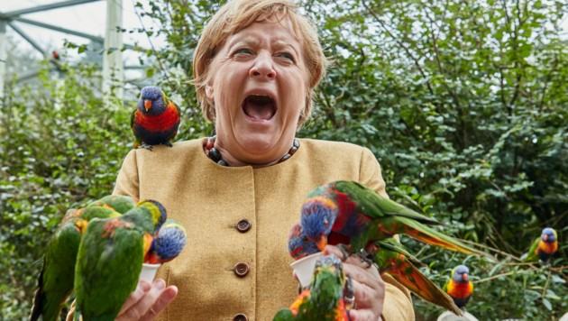 Die deutsche Kanzlerin Angela Merkel fütterte im Vogelpark Marlow australische Loris und wurde dabei gebissen. (Bild: APA/dpa/Georg Wendt)