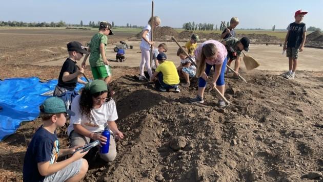 Die Kinder durften mit Studenten gemeinsam graben. (Bild: Volksschule Podersdorf)