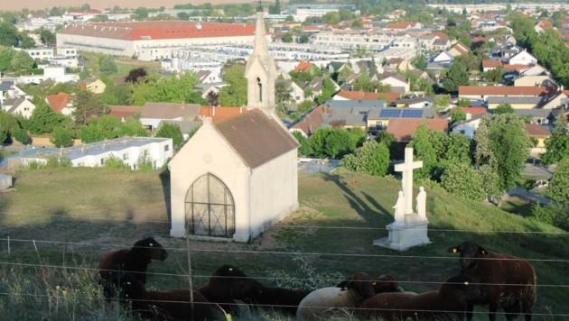 Vor Kurzem feierte man 150-Jahre-Jubiläum des sakralen Bauwerkes in Neusiedl am See. (Bild: Stadtarchiv Neusiedl/ Gemeinde Neusiedl/ Freunde des Kalvarienbergs)