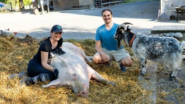Das Schwein Schnitzel gilt als unumstrittener Besucherliebling und genießt die Aufmerksamkeit neben Ziegen und Co. (Bild: Stadt Villach)