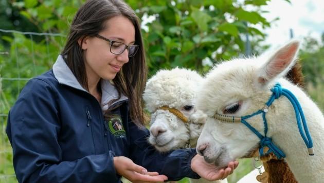 Ausmisten, Füttern und sorgsame Tierpflege sind Teil der täglichen Aufgaben. (Bild: Einöder Horst)