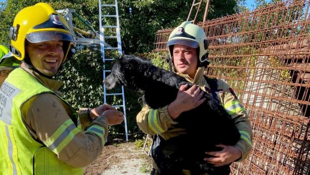 """Die Feuerwehrleute konnten """"Lino"""" unverletzt retten. (Bild: zoom.tirol)"""