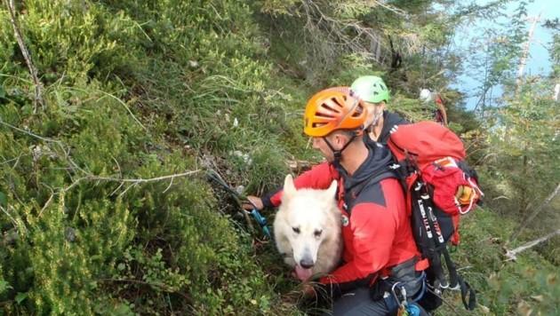 Dieser Schäferhund wurde am Kleinen Schönberg von den Bergrettern geborgen. (Bild: Bergrettung Gmunden)