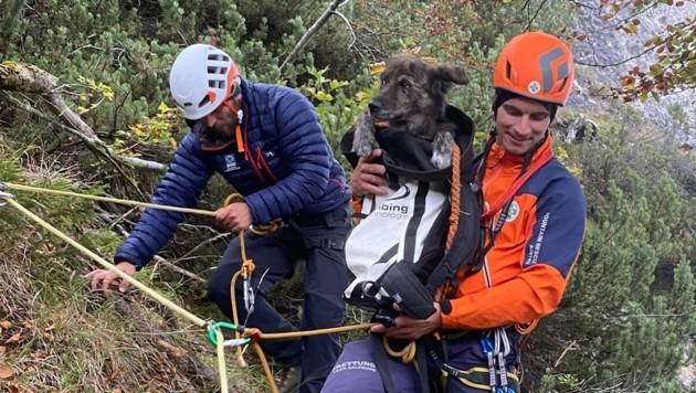 """Die Retter brachten """"Pupi"""" sicher ins Tal (Bild: Bergrettung)"""