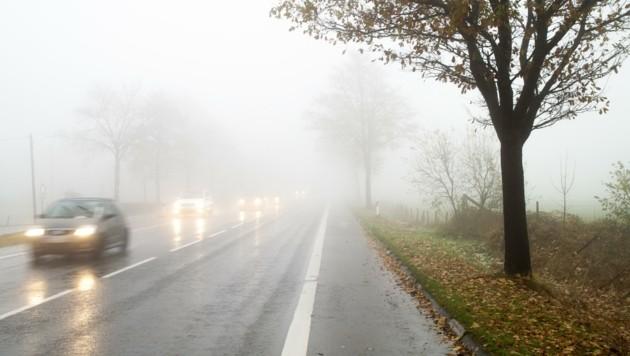 Vor allem bei Regen und Nebel passieren auf den Straßen zahlreiche Unfälle mit Wildtieren. (Bild: Ghazi Ayed)
