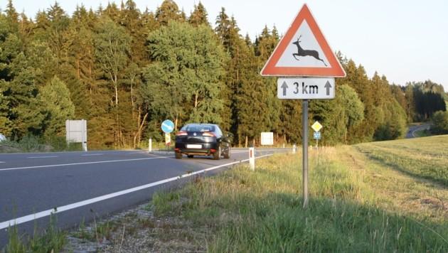 In Österreich kommt es jährlich zu rund 80.000 Wildunfällen, jeder fünfte passiert in Oberösterreich. (Bild: OÖ. Landesjagdverband)