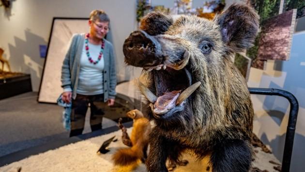 Großstadt-Dschungel: Tierische Begegnungen warten im Haus für Natur auf die Besucher. (Bild: pressefotoLACKINGER)