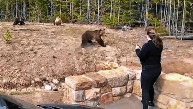 Um ein Foto zu machen, ging die Frau immer näher an die Grizzly-Familie heran. (Bild: Yellowstone Natonal Park)
