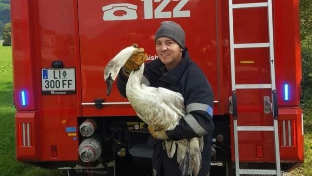Der Schwan wurde von der Feuerwehr Gaishorn gerettet (Bild: FF Gaishorn)