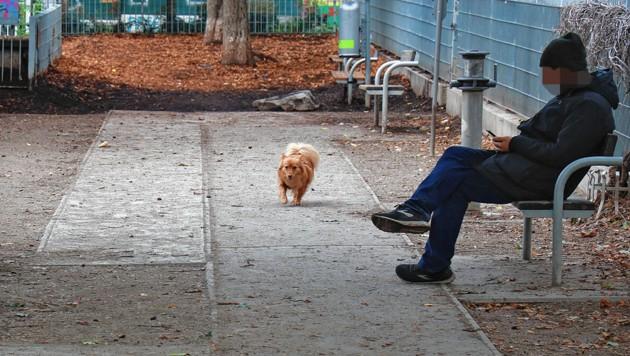 Das Handy ist leider oft wichtiger als der Hund. (Bild: Zwefo, Krone KREATIV)