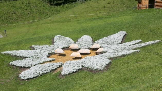 So schaut das rekordverdächtige Blüten-Arrangement aus