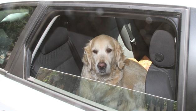 Im Sommer kann das Auto in der prallen Sonne rasch zur Hitzefalle für Kind und Hund werden. (Bild: Pail)