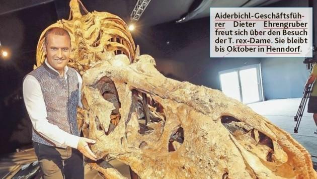 Die T. rex-Dame bleibt bis Oktober in Henndorf. (Bild: Markus Tschepp)
