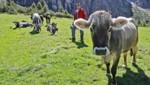 Bauer Reinhard Pfurtscheller inmitten seiner Kühe auf der Pinnis-Alm in Tirol (Bild: Christof Birbaumer)