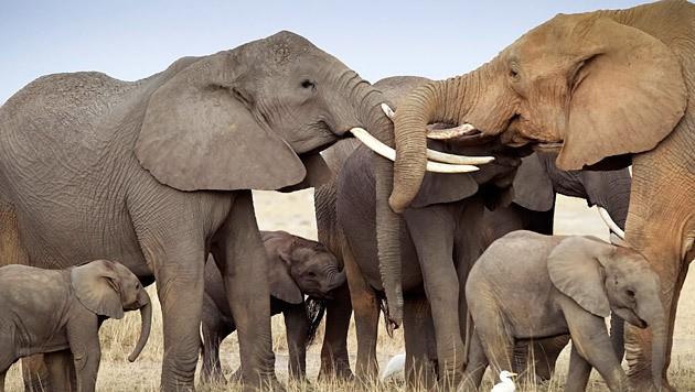 Dürreplage: Namibia versteigert Hunderte Wildtiere