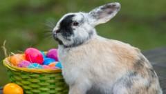 So herzig sie sind: Lebende Tiere gehören nicht ins Osternest (Bild: APA/dpa-Zentralbild/Patrick Pleul)