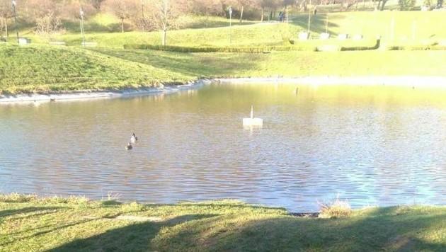 In diesem Teich drohten die Kinder zu ertrinken.