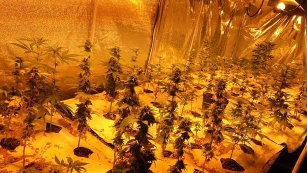 Die Oma war als Cannabis-Bäuerin aktiv (Bild: LPD Wien)