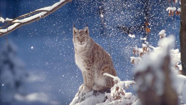 (Bild: WWF/Roger Le Guen)