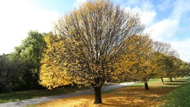 So golden lieben die Steirer den Herbst. (Bild: Jürgen Radspieler)