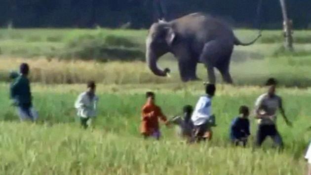 Dramatische Szenen: Die aggressiven Elefanten trampelten alles nieder, was ihnen im Weg stand.