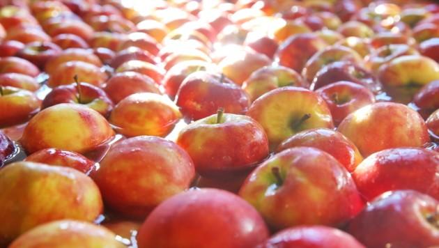 Mit steirischen Äpfeln fuhr eine Delegation nach Wien. (Bild: Sepp Pail)