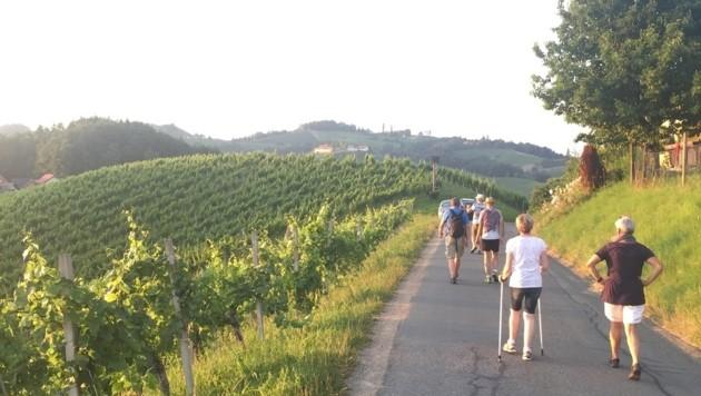 Herrliche Wanderung an den Weinbergen entlang