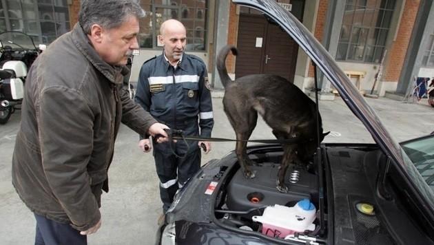 Ein Sprengstoffspürhund (hier eine Übung) soll feststellen, ob sich im Auto eine Bombe befindet.