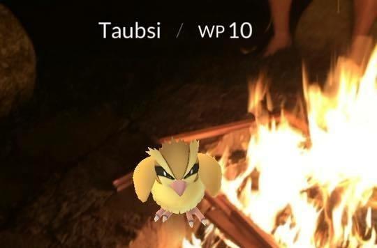 Auch beim Lagerfeuer geht die Pokémon Jagd weiter!