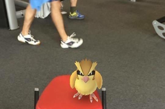 Ein Taubsi beim Training fangen - gesichtet im FitInn Schwechat!