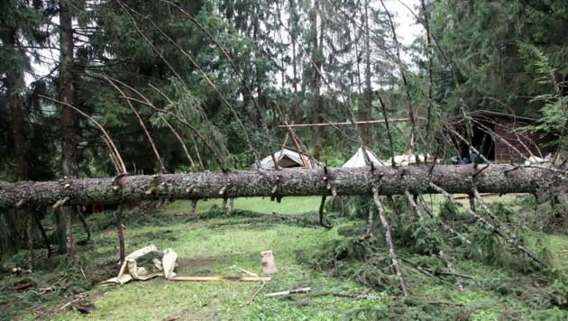 Dieser Baum fiel auf ein Pfadfinder-Zelt in Rosegg