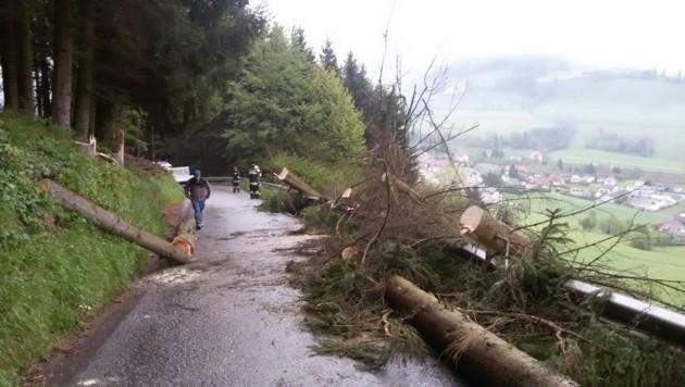 Die Kameraden der FF Reichenfels-St. Peter räumten die Bäume von der Straße weg (Bild: Feuerwehr Reichenfels)