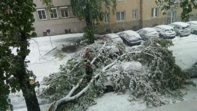 Schwere Schäden durch umgestürzte Bäume