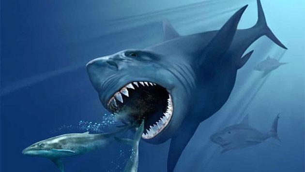 Die künstlerische Illustration zeigt einen Carcharocles megalodon bei der Jagd nach Walen.