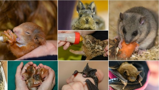 (Bild: Wildtierhilfe Wien)