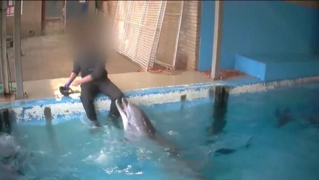 Ist es sexueller Missbrauch oder wissenschaftliche Arbeit, was in diesem Delfinarium passierte? (Bild: facebook.com/RAMBAM)