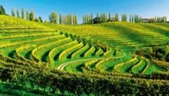 Jeruzalem liegt gleich ums Eck - das Dorf ist Zentrum eines der besten Weinbaugebiete Sloweniens. (Bild: Slowenisches Tourismusbüro)