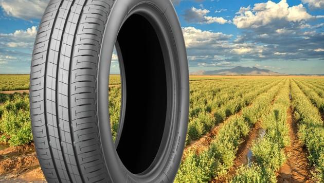 Bridgestone rechnet damit, ab 2020 die ersten Serienreifen mit Guayule auf den Markt zu bringen. (Bild: Bridgestone)